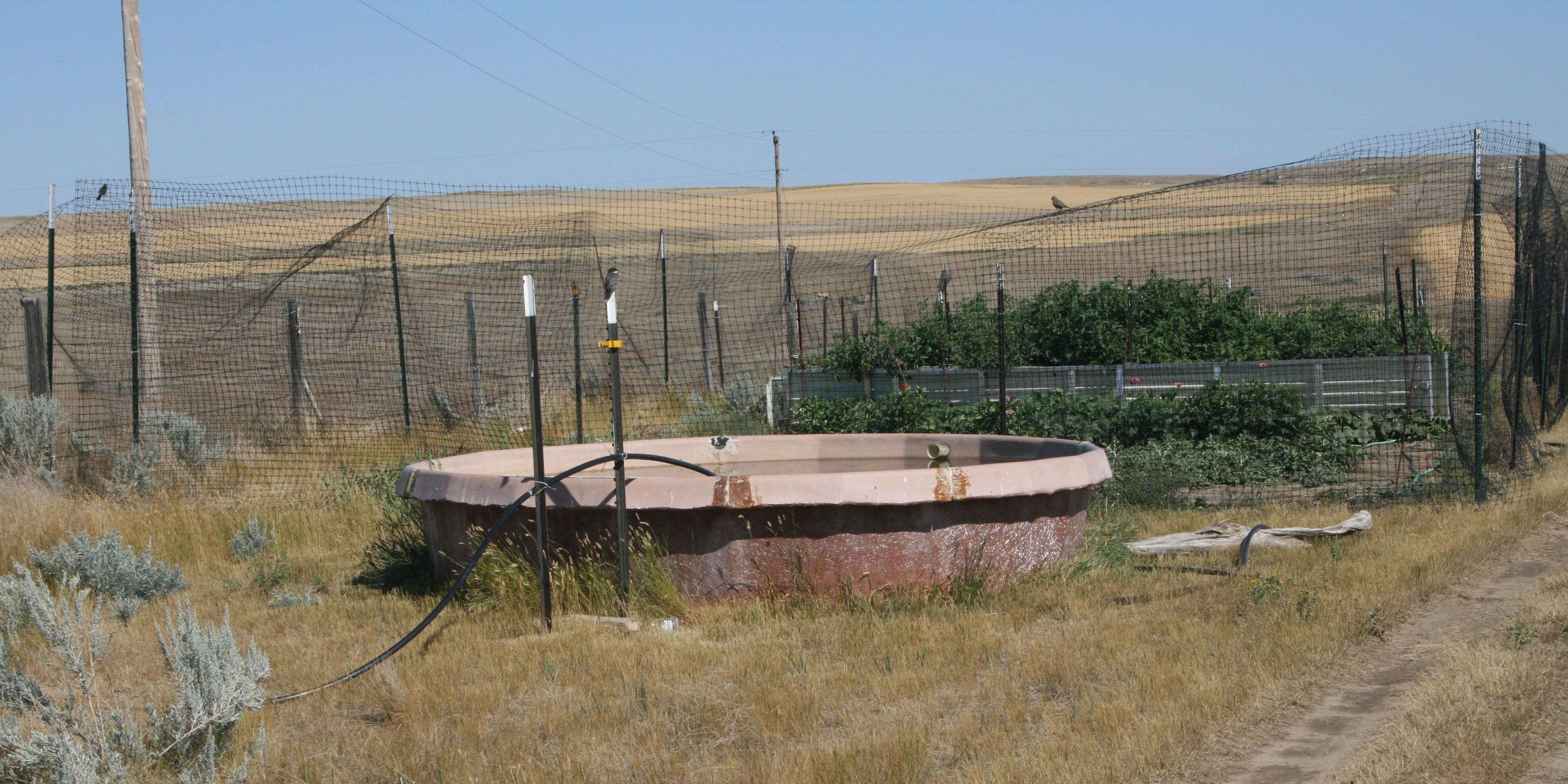 Stock Tank (img_2886)